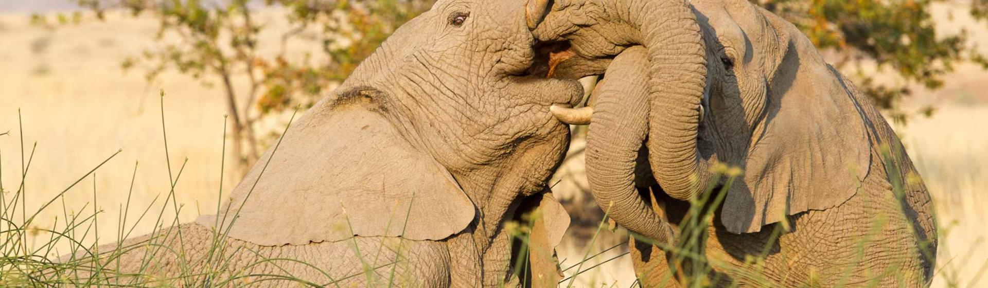23 Days East Africa Wildlife,Gorillas Trekking And Community Adventure