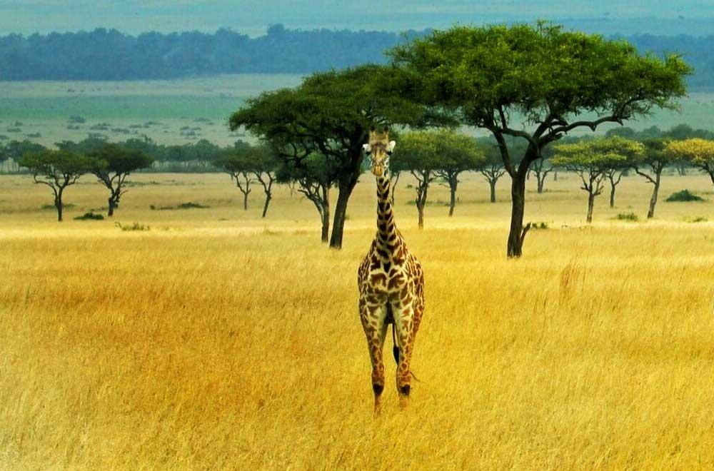 Amboseli National ParkAmboseli National Park