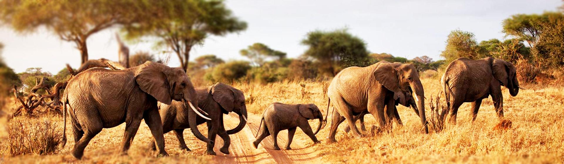 East Africa Adventures
