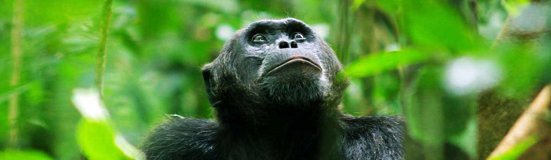 Kibale National Park