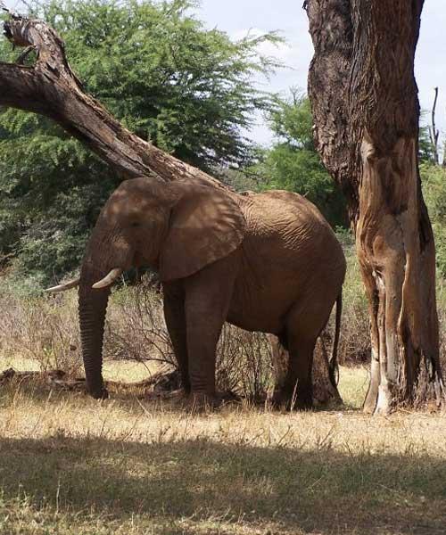 Samburu Game Reserve