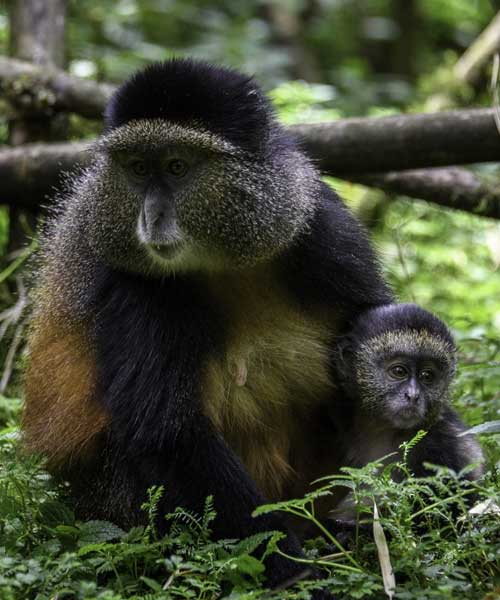 Mukura Forest Reserve