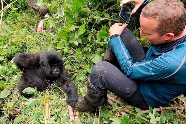 Gorilla & Primate Trekking